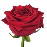 Grootbloemige rode rozen  €1,95