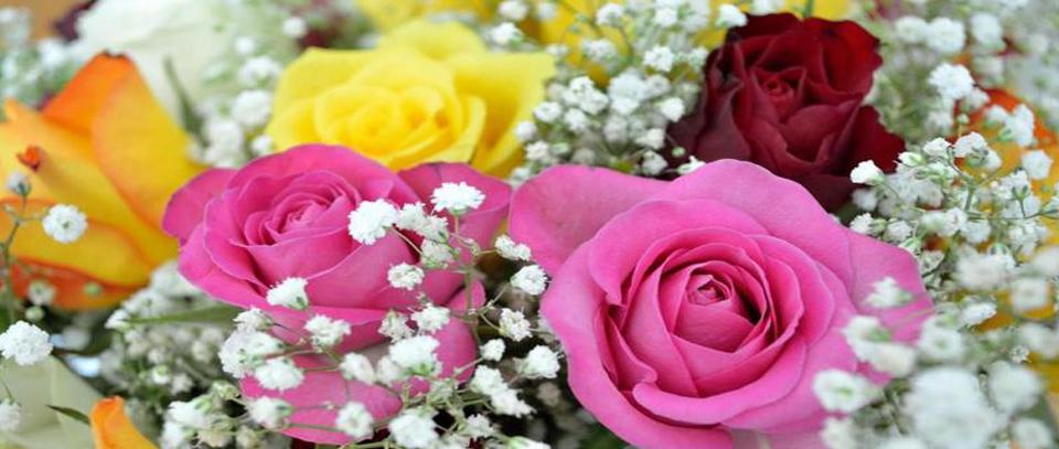 roosjes met gipskruid